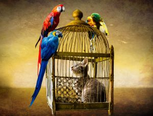 bunny in birdcage guarded by parrots